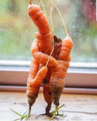 A natureza e os milagres silenciosos que não buscam atenção.   Mamãe e bebês tangerinas, cenouras amiguinhas, o olhar de um abacate... passando na sua timeline pra mostrar a beleza que é existir!   🥑💚